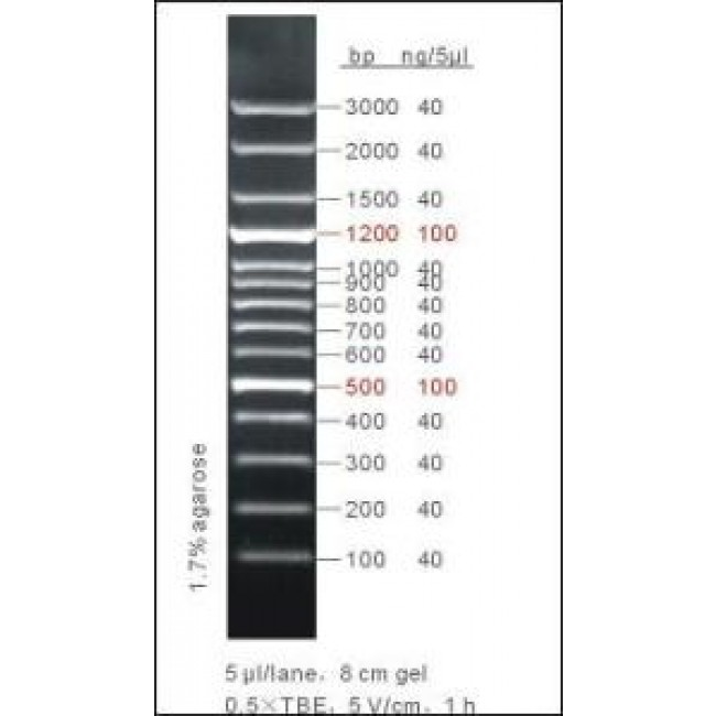 100bp Dna Ladder Plus 50ug Gt 100 Lanes