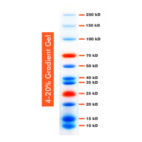 10-250kDa Wide Range Blue-Red Two Colour Protein Ladder, Prestained