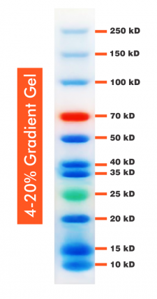 10-250kDa Wide Range Blue-Red-Green Three Color Protein Ladder, Prestained, 500ul